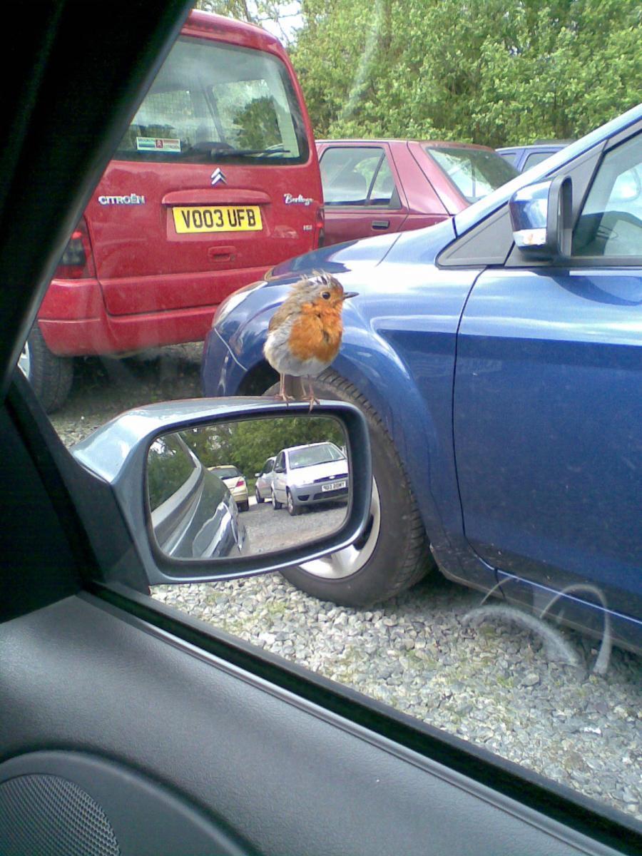 A Robin on my mirror